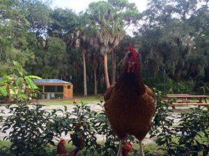 Egg Production Supervisor at A Country Place Assisted Living Facility.